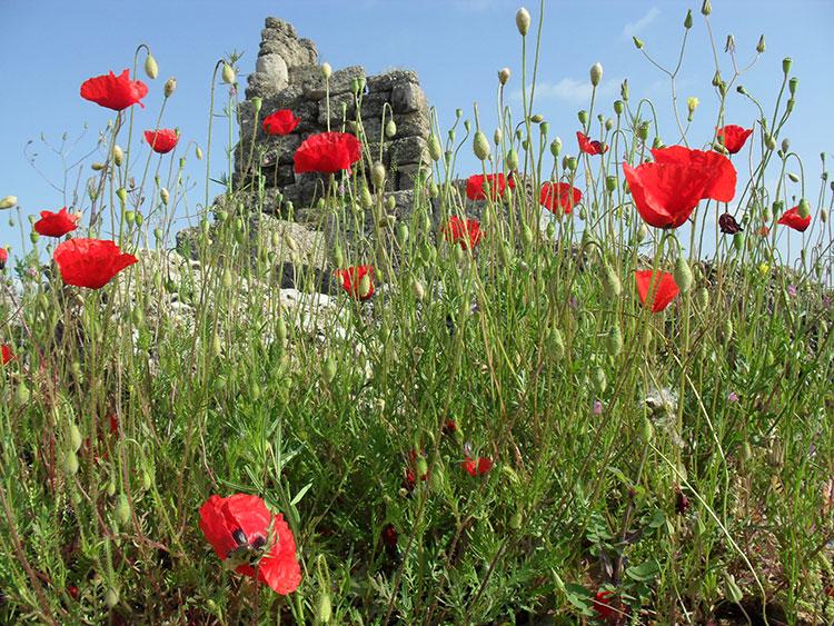 Valmue-og-ruin-Bra-bilde-web-oko-prosjekt-Tyrkia